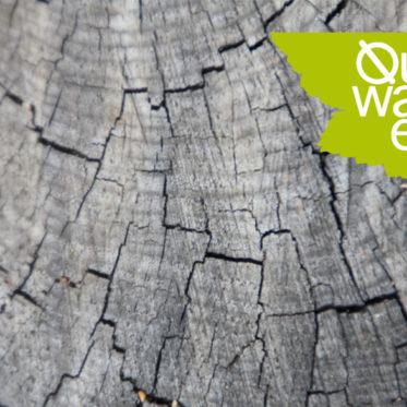 QuerWaldEin Workshop